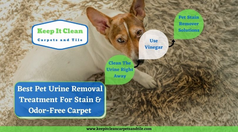 Best Pet Urine Removal Treatment For Stain And Odor-Free Carpet